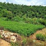 Đất Xã Đôngthanh,Full Thổ Cư, Mặt Tiền Dài Tận 97M