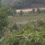Đất Diên Thọ 68.000M2 Giá Rẻ