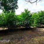 Cho Thuê Đất Canh Tác Mãng Cầu Ở Tây Ninh