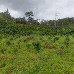 Đất Suối Đa Nhim, Đà Lạt - 950 Triệu. Liên Hệ 0902095432
