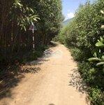 Đất Vườn 1900M2 Cây Lâu Năm- 2 Mặt Tiền Khánh Đông