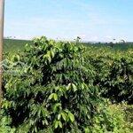 Cần Bán 2 Lô Đất Vườn Dt Rộng Giá Rẻ Ở Lâm Hà- Lđ