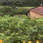 1702M Đất View Đẹp Xã Mê Linh, Cách 725 1,7Km, Shr, Đường Xe Hơi Giá 1,250 Tỷ