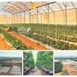 Đất Trang Trai Bình Thuận Giá Chỉ Từ 60 Ngàn/M2