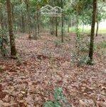 Cắt 800Ha Đất Cao Su Đẹp Giải Ngân Hàng, Đắk Nông