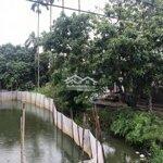 Bán 2440M2 Ở Thiên Hương,Thủy Nguyên,Hp