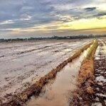 Đất ruộng giá rẻ tp Tân An