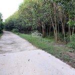 Bán Đất Trồng Cây Lâu Năm Khánh Vĩnh, Cách Tỉnh Lộ 8C Chỉ 300M