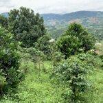Đất Khai Hoang Đang Chờ Cấp Giấy Tờ 1 Hecta