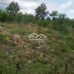 Cần bán lô đất mầu 800m khu vực hòa nhơn