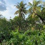 Đất Vườn Mặt Tiền Sông Xã Nhơn Thạnh Tp Bến Tre 2915M2.