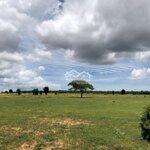 Bán Lô Đất Xã Bình Tân Khu Trang Trại Dưa Lưới