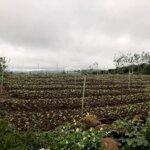 Cần Bán Mảnh Đất View Đẹp Ở Phúc Thọ Lâm Hà