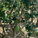 Cần Bán Khu Vườn Huyện Khánh Vĩnh View Sông Cái Với Giá Cực Tốt. Lh: 0982497979
