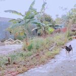 520tr hòa Phong ko lụt ô tô mầm non 500m 151m2