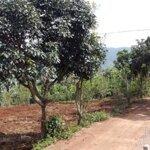 Đất Nền Đầu Tư Giá Rẽ Tt Nam Ban Lâm Đồng 431M2 Full 627Tr/ 100M2 Thổ Cư