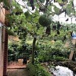 Bán Trang Trại Nghỉ Dưỡng Lâm Hà, Lâm Đồng