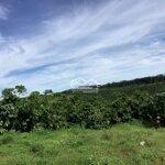 Bán Đất Nghĩ Dưỡng, Làm Farmstay Lộc Tân