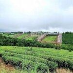 Đất View Đồi Săn Mây Xã Lộc Ngãi, Huyện Bảo Lâm Giá Cực Tốt Lh 0935 381 382