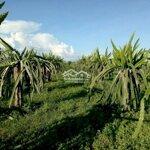 Cần Bán Đất Nông Nghiệp Bình Thuận -8549M2