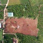 Cần Ra Lô Đất Liền Kề Tt Nam Ban Lâm Hà Lâm Đồng