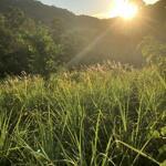 Siêu Phẩm 4000M View Ruộng Bậc Thang Núi Non Hùng Vĩ Trùng Điệp Bao Quanh
