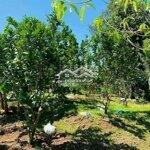 Bán Nhanh Vườn Bưởi Khánh Nam.có Suối Giá 790Tr