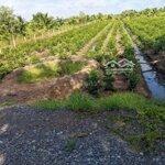 Bán Thửa Đất Vườn 1002M2 Đường Vườn Thơm Hbc