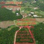 Bán Đất Viu Ruộng Suối Đường Bê Tông Nhìu Mặt Tiền