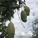 Chính Chủ Cần Bán Lô Đất Vườn Farm Nghĩ Dưỡng, Giá 1.8 Tỷ. Hoa Hồng Cho Môi Giới 5%