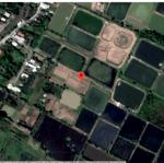 Bán Đất Nông Nghiệp 375M² Tại Đường Nam Sông Hậu, Xã Vĩnh Trạch, Thành Phố Bạc Liêu, Bạc Liêu Giá 270 Triệu