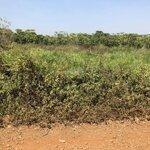 Em Còn Một Vài Lô Đất Nghỉ Dưỡng Bảo Lộc View Hồ Sinh Thái. Anh Chị Quan Tâm Đất Hồ Thì Liên Hệ Em