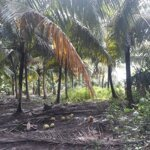 Cần bán 3117 m2. đất vươn dừa thuộc huyện Cầu Kè tỉnh Trà Vinh