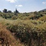 đất nông nghiệp trồng nhiều loại cây