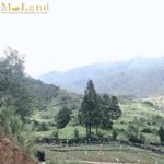 Bán đất tại ô quý hồ sapa - lào cai
