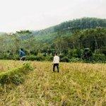 Cần nhượng lại 12ha đất rừng sản xuất