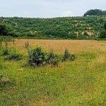 Bán đất cư yên,lương sơn,hòa bình 1.2ha full thổ cư giá bán 1.16 triệu/m