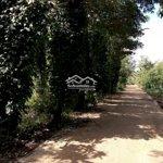 Bán đất 2mặt tiềnthôn 8 xã cư bua (50x37; 1.750ty)