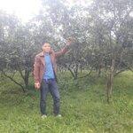 Bán gấp 6ha đất rừng sản xuất đang trồng cam