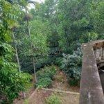 Bán 5,3 ha đất làm nhà vườn, nghỉ dưỡng ba vì