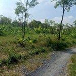 Bán 305m2 đất cây hàng năm 200 triệuiệu
