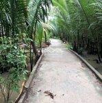 Còn 1 công đất vườn cây ăn trái nhơn thạnh