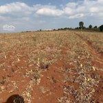 đất cho thuê dài hạn tại lâm hà, lâm đồng - núi xanh land - mrs. ha 0793760777