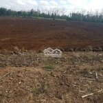 Cần bán hơn 4 xào rẫy đất đỏ đang thu tiêu ổn định