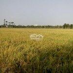 đất nông nghiệp cho thuê ngắn/dài hạn 7600m2