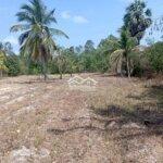Bán đất trồng cây mặt tiền đường nhựa tịnh biên