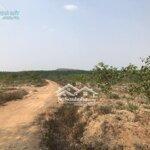 Bán đất 18,2hecta huyện cưjut-đak nông
