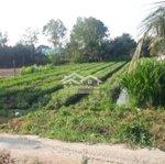 đất vườn long bình điền 1060 m2