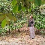 đất bán 625m2, 3 tỷ 8, cách đường đt 769 50m hai mặt tiền, đang có vườn cây ăn trái, 0933800109