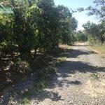 đất vườn định quán rộng 47100m2 4,7ha trồng xoài,sổ hồng,điện nước đầy đủ, giá bán 9.8ty